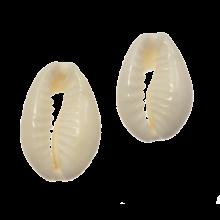 Perles Coquillage Cauris (13 - 16 mm) Seashell (15gr / env. 40 pièces)